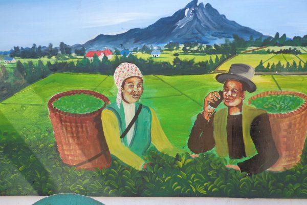 9 Tea Farming
